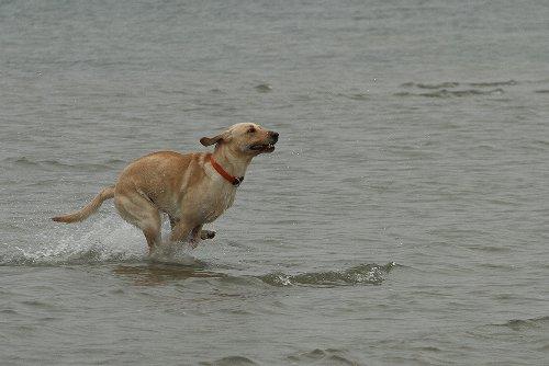 Schließlich kann ich auch über Wasser laufen.