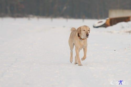 Verträumt im Schnee laufen.