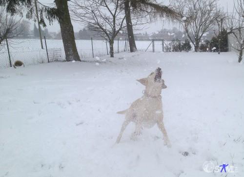 Wau! Noch mehr Schnee!