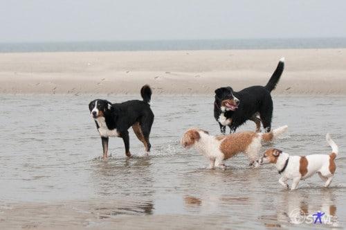 Manche Hunde nehmen ein Fußbad....