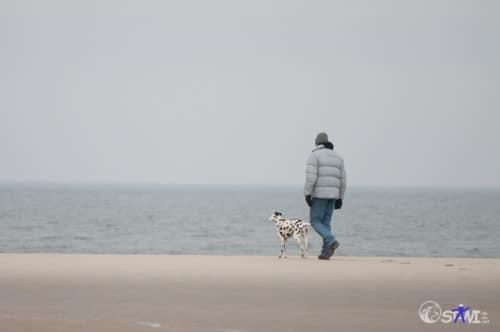 ...andere gehen alleine mit ihren Mensch am Wasser entlang.