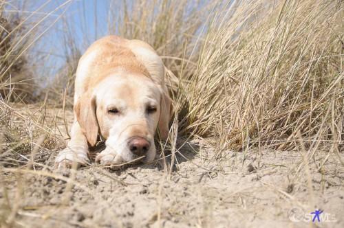 Da lege ich mich doch in den kühlen Sand.