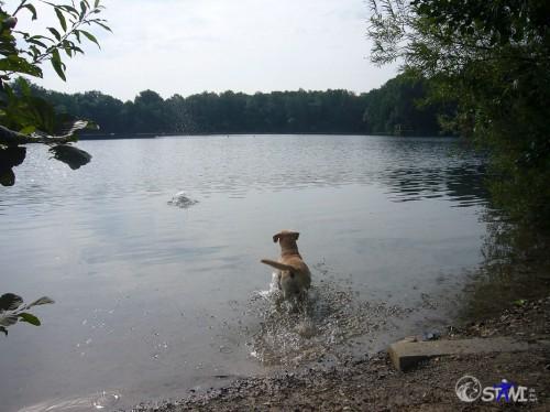 Ding fliegt ins Wasser.