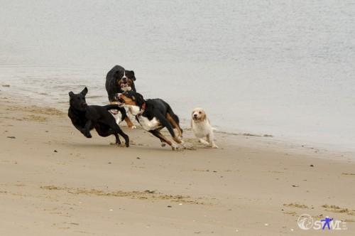 Hundemopping