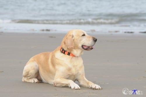 Ich genieße mal den Strand