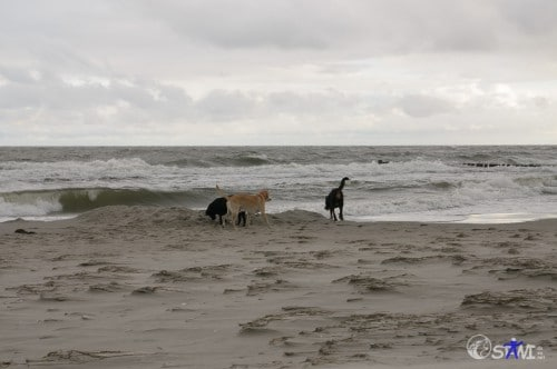 Morgenrunde am Strand.