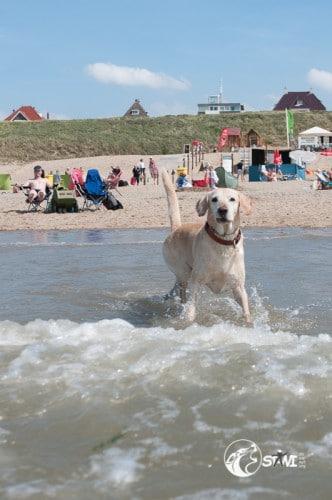 Hey, großer Mann! Was machst du schon wieder im Wasser?