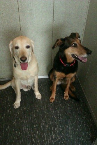 Schnitzel und Mona im Aufzug, zu Besuch bei Muttern.