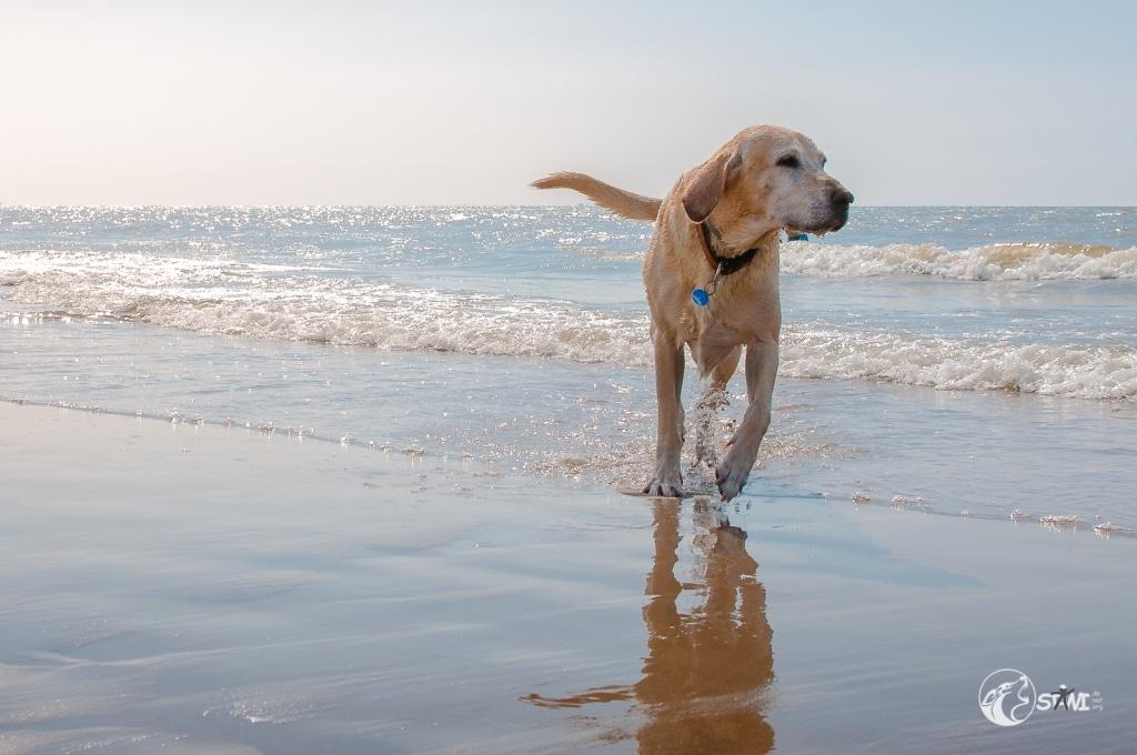 Entspannt am Meer