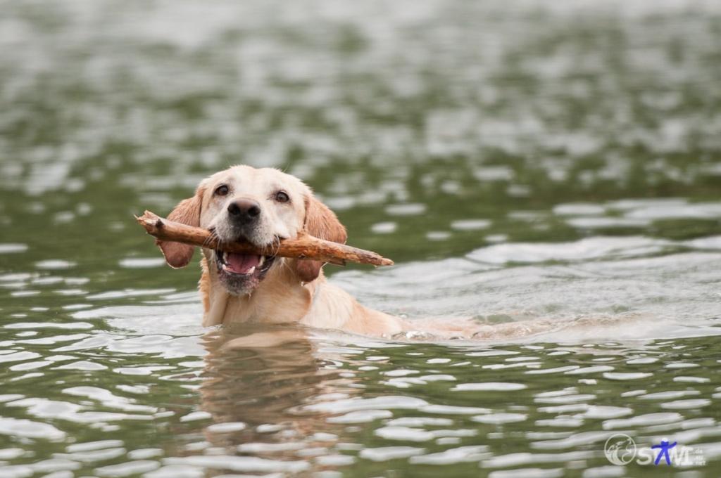 Dingholen im Wasser